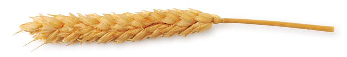 eat-whole-grains-for-a-clean-diet